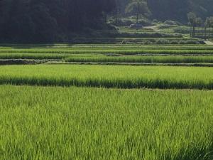 魚沼産コシヒカリ 新潟県魚沼の田園風景
